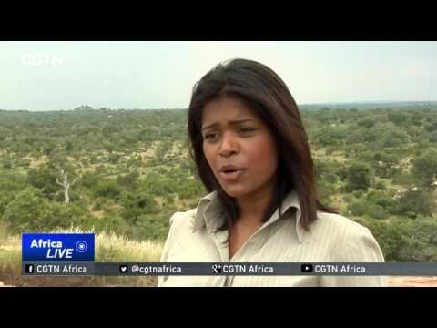 Researchers Counting Cost Of Drought On Wildlife At Kruger National Park