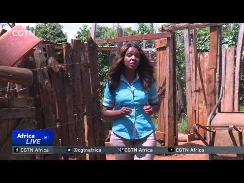 Chicken Farming Project Empowers Kenyan Women