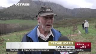 Truffles Fuel South African Industry