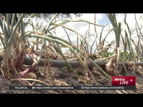 Kenyans Harness Solar Power To Irrigate Crops