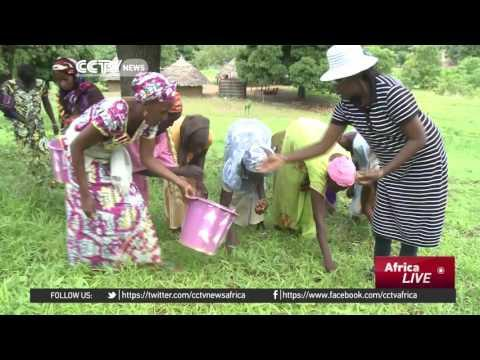Senegalese Shea Butter Initiative Lifts Women Out Of Poverty