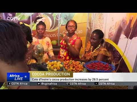 Cote D' Ivoire Cocoa Production Increases By 28.5 Percent