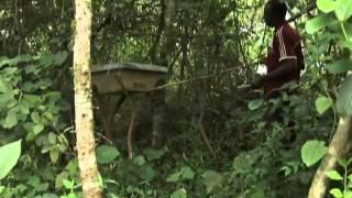 Conserving Forests To Reduce Carbon Emissions In Uganda