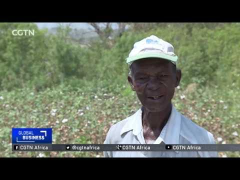 Dry Spells, Low Prices Crippling Cotton Farmers In Uganda