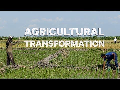 Burundi's Agricultural Transformation