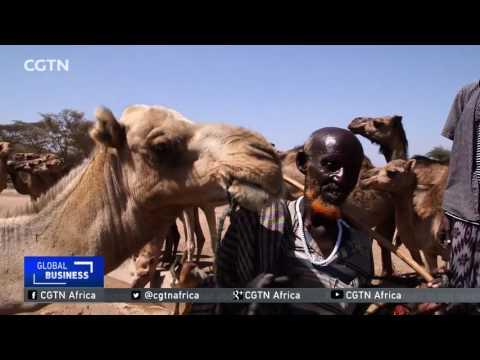 Millions Affected By Recent Drought In Ethiopia's Southern Region