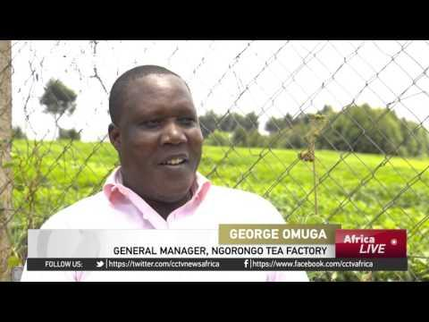Kenyan Tea Manufacturers Use Chinese Finances To Expand