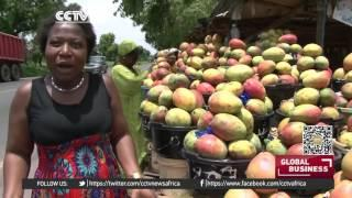Senegal Farmers Take Up Organic Farming