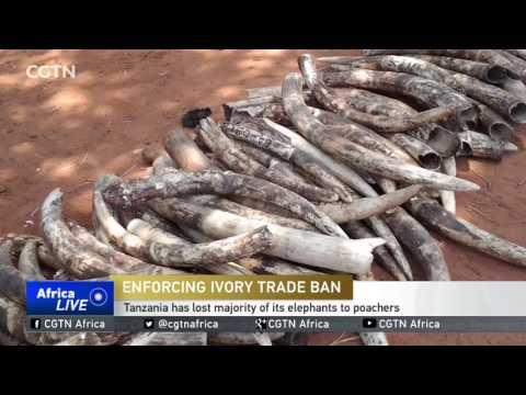 Tanzanian Court Sentences Couple To 20 Years For Ivory Possession