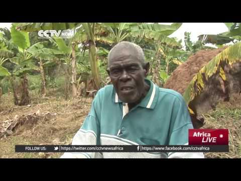 Farmers Faced With The Effects Of Climate Change In Côte D'Ivoire