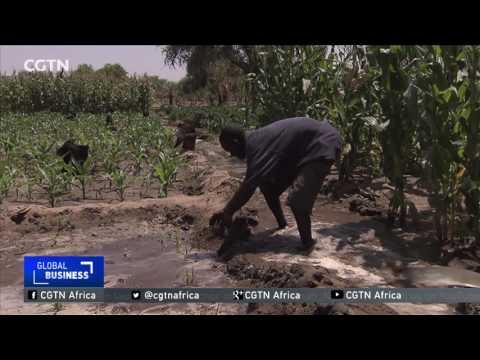 Kenya's Semi-arid Turkana County Holds Vast Irrigation Potential