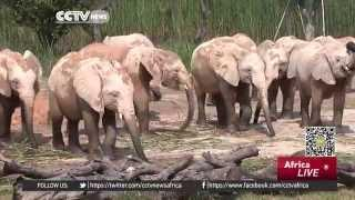 China Receives Elephants From Zimbabwe