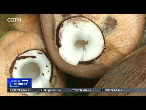 Nigerian Processors Push For More Gov't Support As Coconut Demand Grows