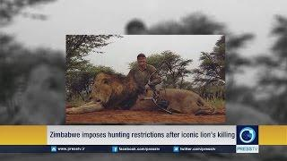Zimbabwe Imposes Hunting Restriction After Iconic Lion's Killing
