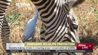 Zimbabwe Making Strides In Ensuring Proper Conservation Of Wildlife