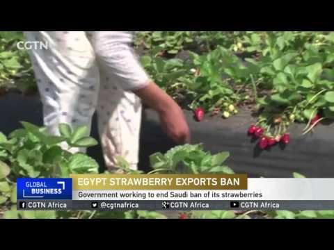 Egyptian Government Working To End Saudi Ban Of Its Strawberries