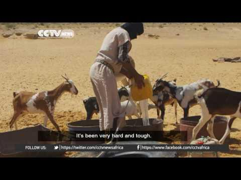 The Desert: Journey Through The Sahara Lays Bare Effects Of Climate Change