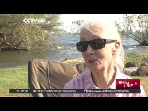 Conservation Guru Jane Goodall Tours Uganda Sanctuary
