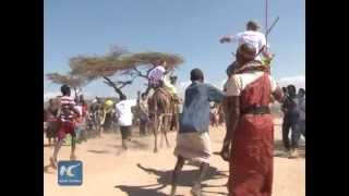 Camel Derby In East Africa Prairie After An Upsurge In Terrorism