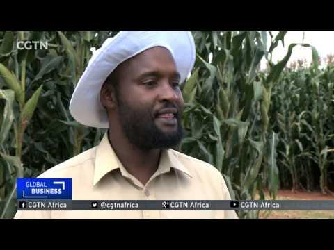 Zimbabwe Food Security: Agriculture Stakeholders Advocate For Holistic Approach To Farming