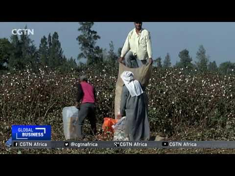 Crackdown On Counterfeit Cotton In Egypt Catalyses Crop Cultivation