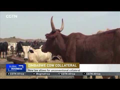 Commercial Banks In Zimbabwe To Be Compelled To Accept Livestock As Collateral