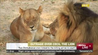 Two Zimbabwean Men Linked To Cecil The Lion Killing Arrive In Court
