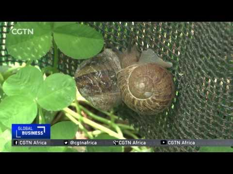South Africa Eyes A Spot In The Snail Supply Chain