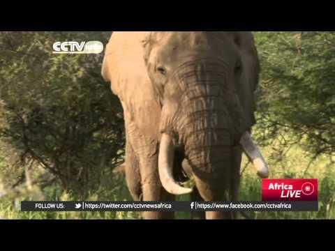 Tanzania Poachers Kill Park Pilot