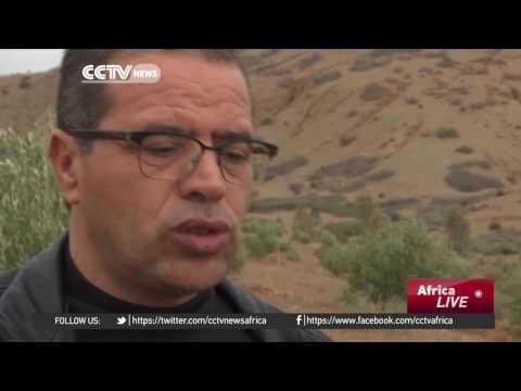 Morocco's Olive Farmers Benefit From Development Initiatives