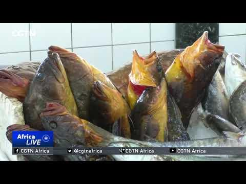 Libya Conflict Takes Toll On Fishing Industry