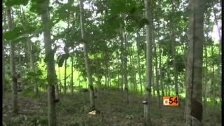 Ivory Coast Rubber Plantations