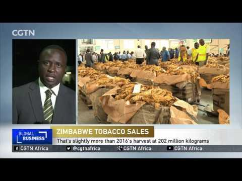 Zimbabwe Government Hoping To Boost Dollar Reserves After Leaf Sales