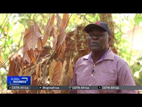 Farmers Battling The Effects Of Prolonged Drought