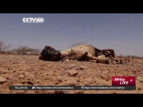 Severe Drought Affecting Hundreds And Thousands In Somalia