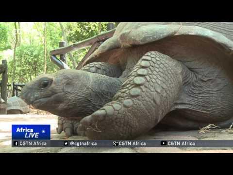Giant Tortoise Of Zanzibar