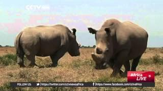 Saving The Northern White Rhino